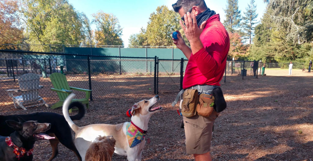 """A white man in sunglasses looks down excitedly at a white and brown dog with his hands up in a """"surprise"""" expression. The dog is looking up at him with his mouth open and long tail wagging. They are standing in a dog park with mulch on the ground and other dogs nearby."""