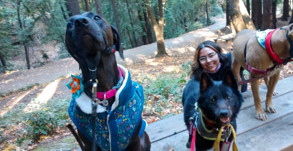 Three dogs sit on top of a park table with their best human gal. She is a Latine woman with a big smile and cool hair streaks framing her face along with clear-framed glasses. The dogs we can see clearly are dark black and making cute big brown-eyed faces while waiting for their treats.